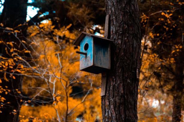 Bird box mounted onto a tree during autumn